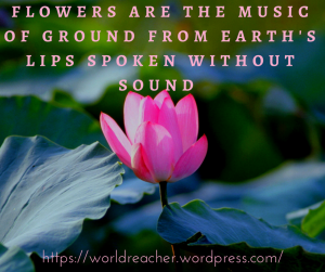 https___worldreacher.wordpress.com flowers